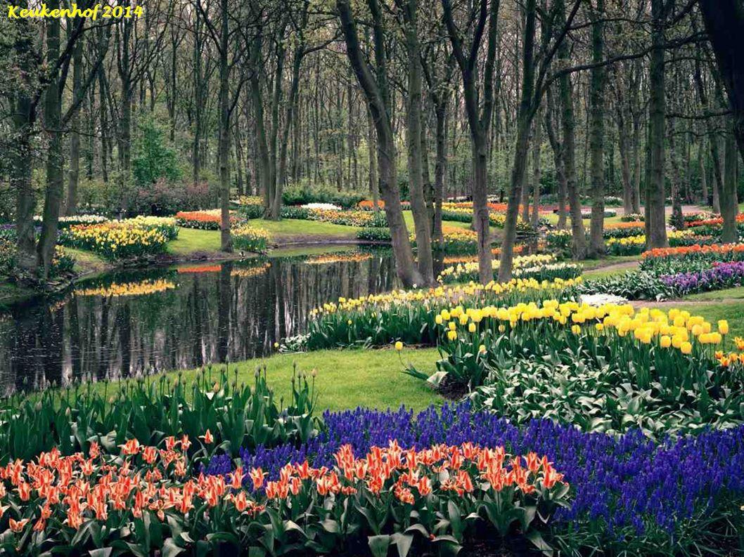 Blauwe Theehuis Vondelpark Tulpen-Amsterdam