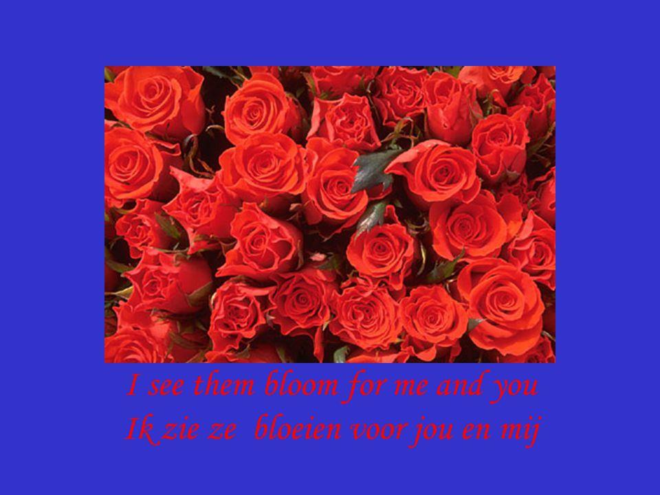 I see them bloom for me and you Ik zie ze bloeien voor jou en mij