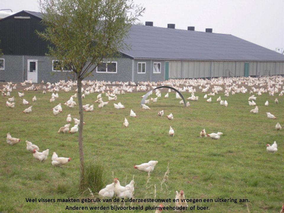 De afsluiting had grote gevolgen voor de visserij en de natuur, en betekende de nekslag voor de duizenden vissers die op de Zuiderzee hun boterham verdienden...