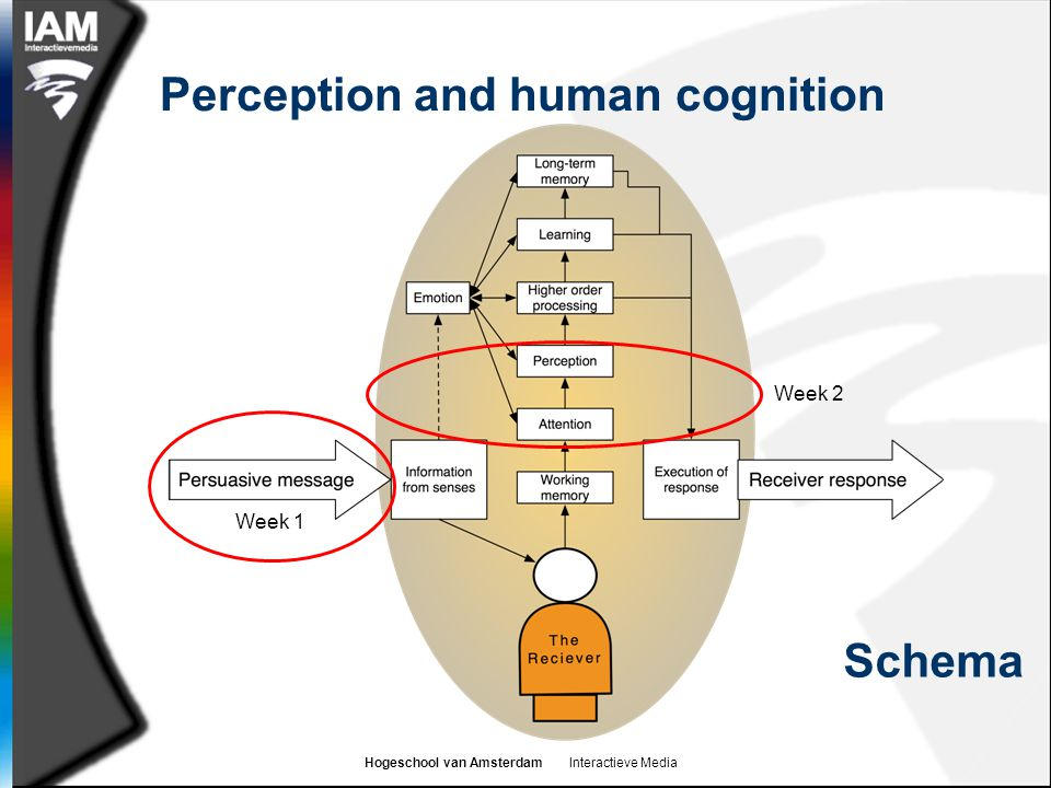 Hogeschool van Amsterdam Interactieve Media Perception and human cognition Week 1 Week 2 Schema