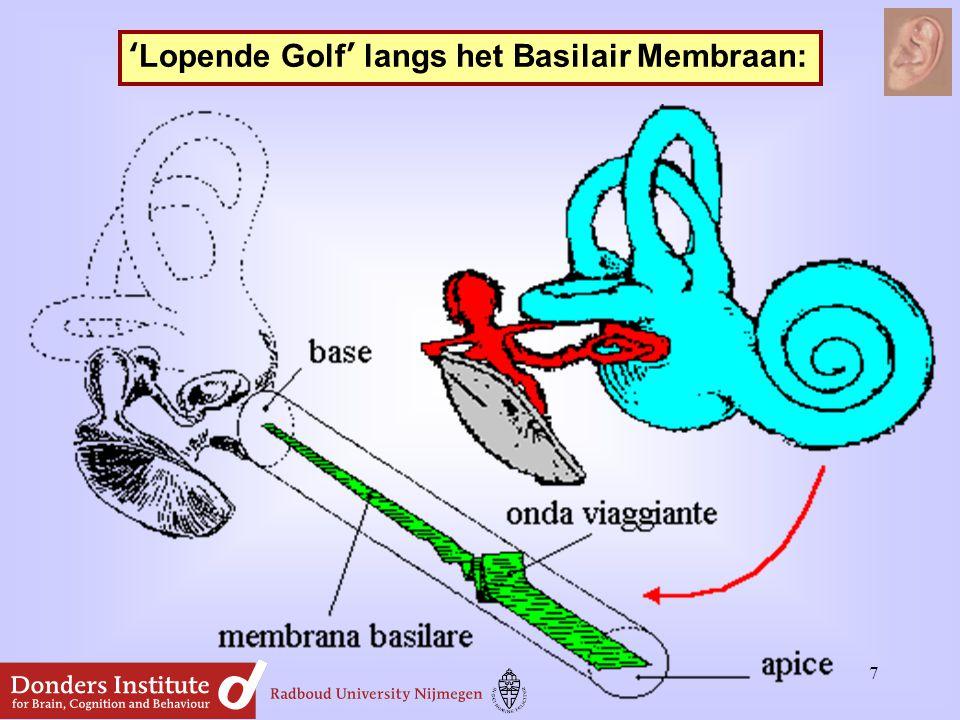 'Lopende Golf' langs het Basilair Membraan: 7