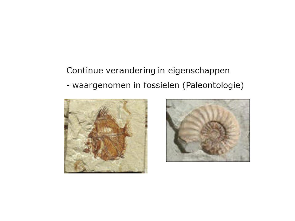 Continue verandering in eigenschappen - waargenomen in fossielen (Paleontologie)