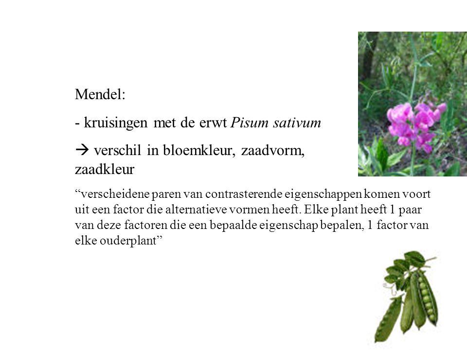 """Mendel: - kruisingen met de erwt Pisum sativum  verschil in bloemkleur, zaadvorm, zaadkleur """"verscheidene paren van contrasterende eigenschappen kome"""