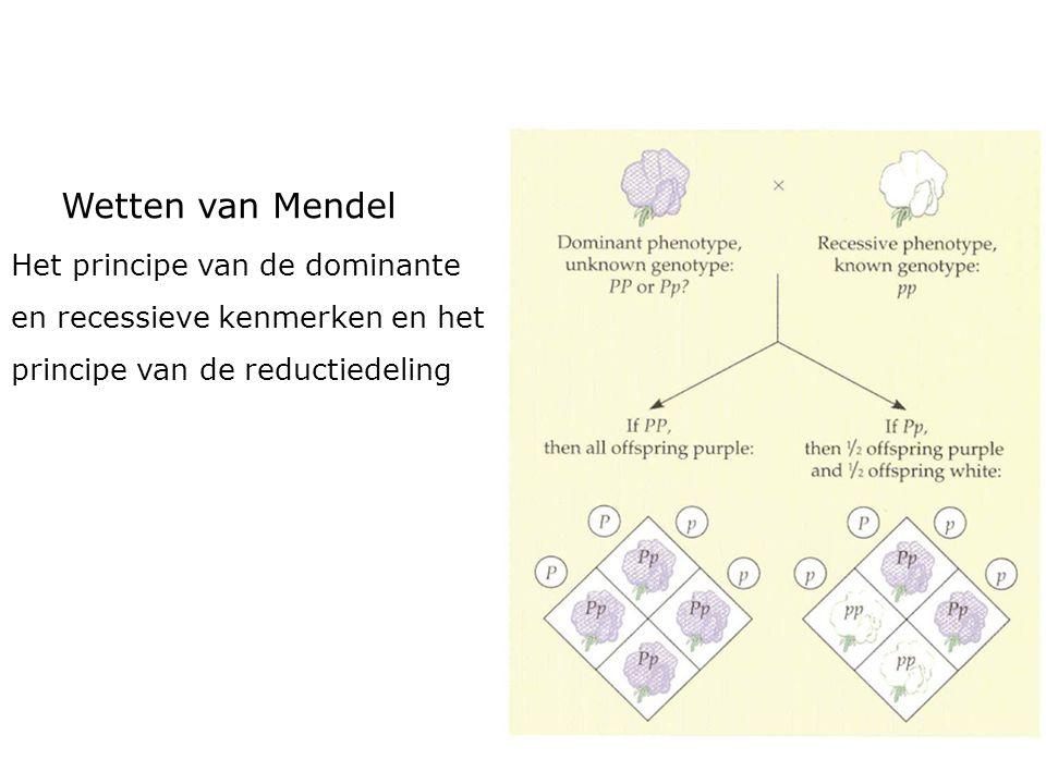 Wetten van Mendel Het principe van de dominante en recessieve kenmerken en het principe van de reductiedeling