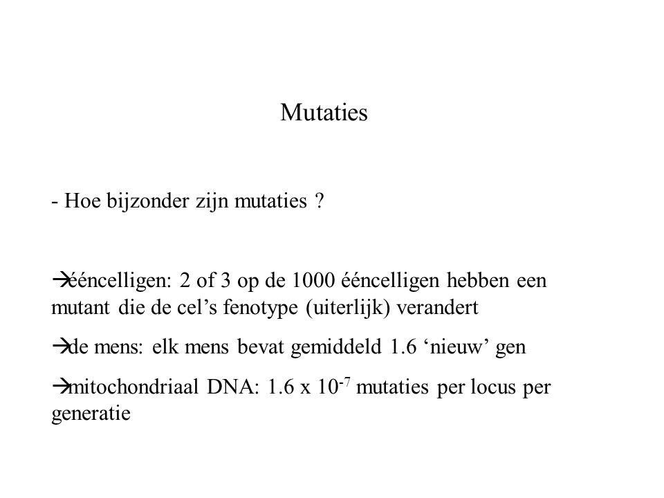 Mutaties - Hoe bijzonder zijn mutaties ?  ééncelligen: 2 of 3 op de 1000 ééncelligen hebben een mutant die de cel's fenotype (uiterlijk) verandert 