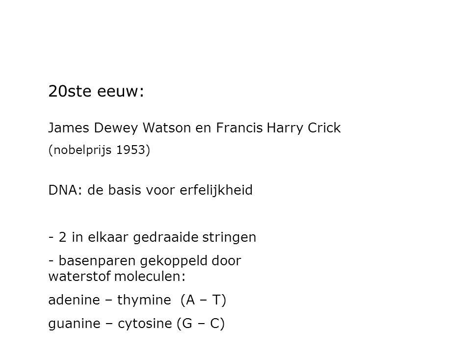 20ste eeuw: James Dewey Watson en Francis Harry Crick (nobelprijs 1953) DNA: de basis voor erfelijkheid - 2 in elkaar gedraaide stringen - basenparen