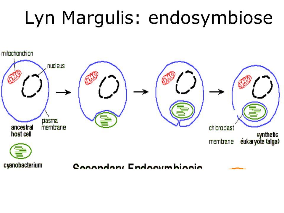 Lyn Margulis: endosymbiose
