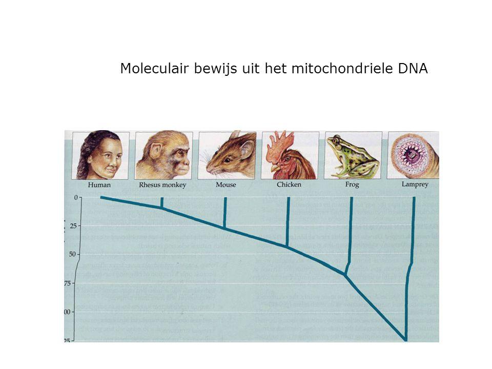 Moleculair bewijs uit het mitochondriele DNA