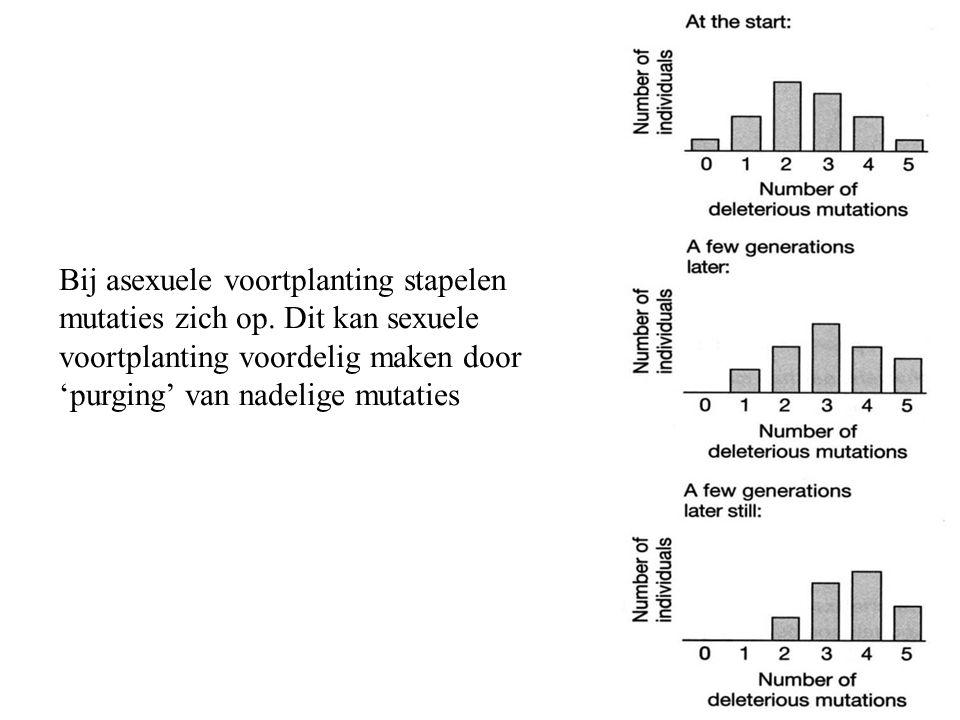 Bij asexuele voortplanting stapelen mutaties zich op. Dit kan sexuele voortplanting voordelig maken door 'purging' van nadelige mutaties