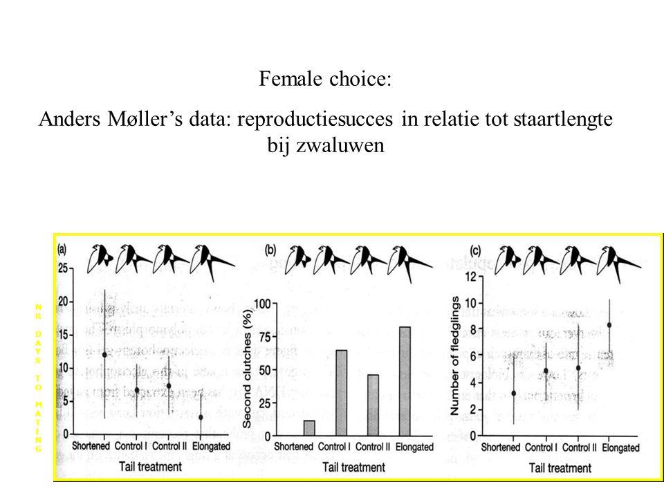Female choice: Anders Møller's data: reproductiesucces in relatie tot staartlengte bij zwaluwen NRDAYSTOMATINGNRDAYSTOMATING