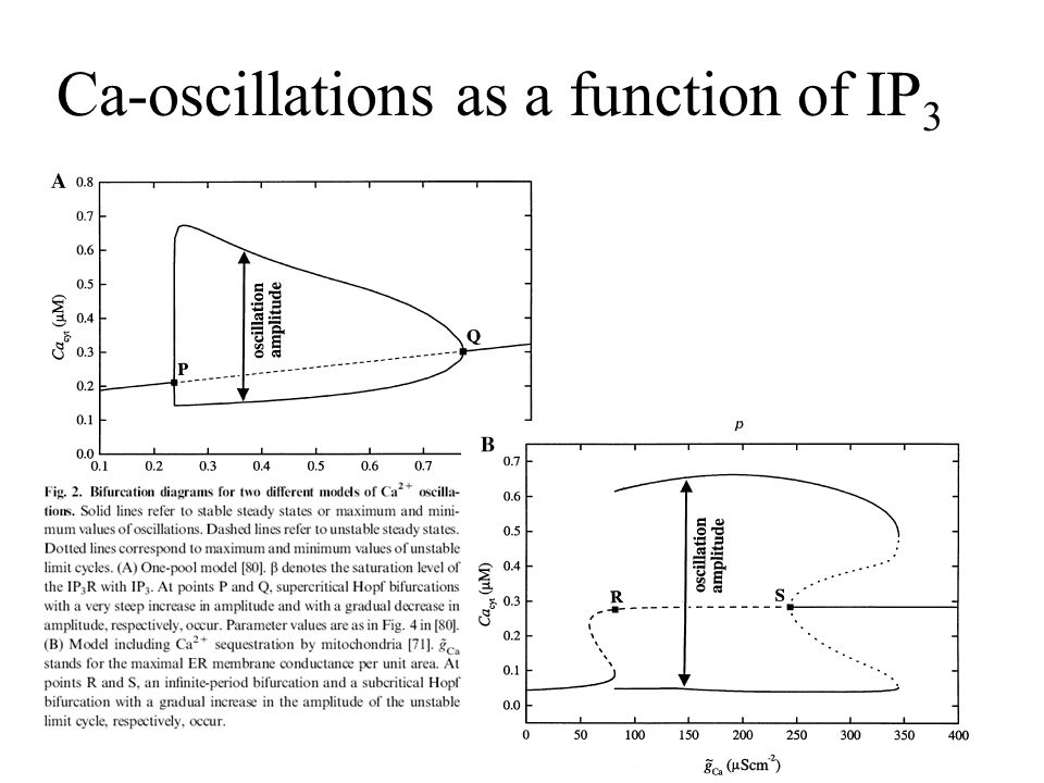 Ca-oscillations as a function of IP 3