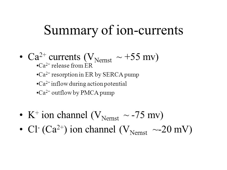 Ca 2+ currents (V Nernst ~ +55 mv) K + ion channel (V Nernst ~ -75 mv) Cl - (Ca 2+ ) ion channel (V Nernst ~-20 mV) Summary of ion-currents Ca 2+ release from ER Ca 2+ resorption in ER by SERCA pump Ca 2+ inflow during action potential Ca 2+ outflow by PMCA pump