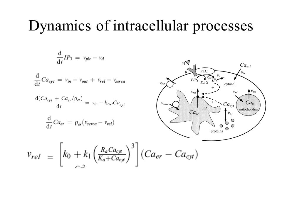 Dynamics of intracellular processes =