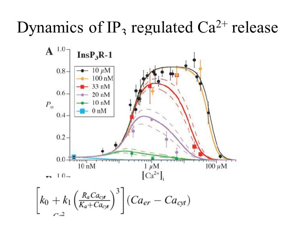 Schematic model of Ca-dynamics
