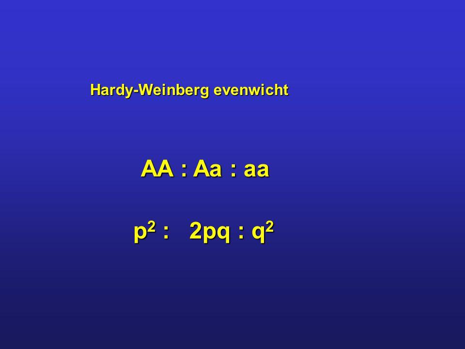 Hardy-Weinberg evenwicht AA : Aa : aa p 2 : 2pq : q 2