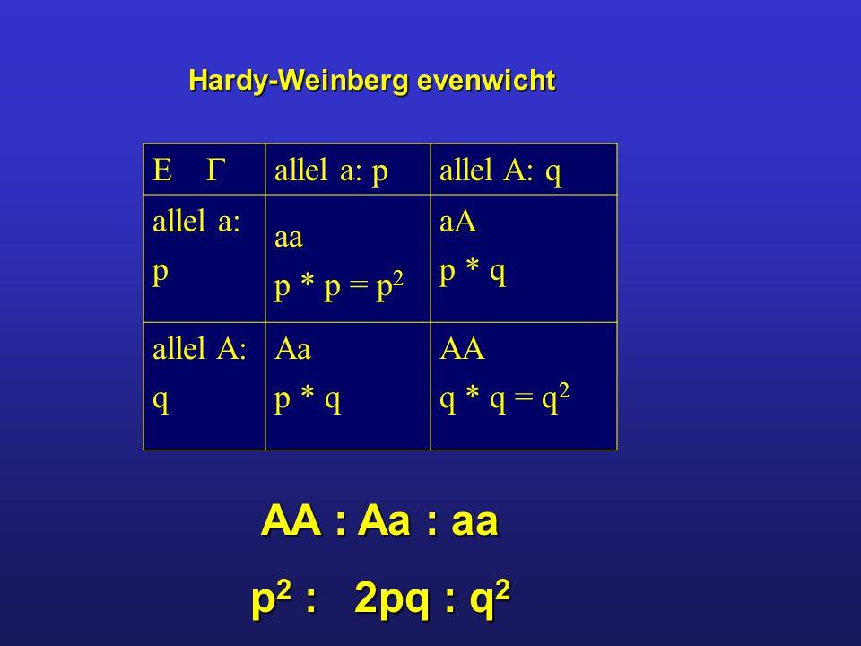 Hardy-Weinberg evenwicht   allel a: pallel A: q allel a: p aa p * p = p 2 aA p * q allel A: q Aa p * q AA q * q = q 2 AA : Aa : aa p 2 : 2pq : q 2