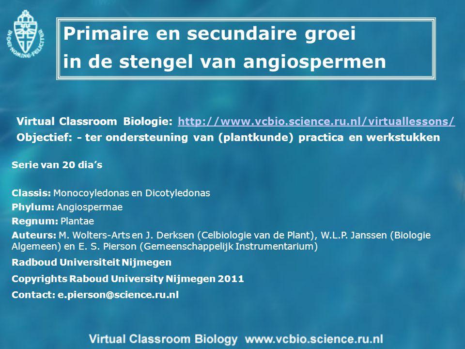 Serie van 20 dia's Classis: Monocoyledonas en Dicotyledonas Phylum: Angiospermae Regnum: Plantae Auteurs: M. Wolters-Arts en J. Derksen (Celbiologie v