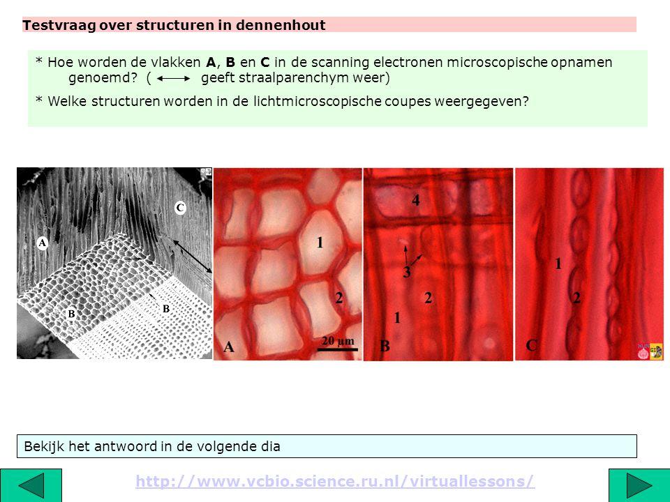 Titel: Detail van een tangentiale doorsnede door tracheiden van dennenhout, met hofstippels. http://www.vcbio.science.ru.nl/virtuallessons/ De primair