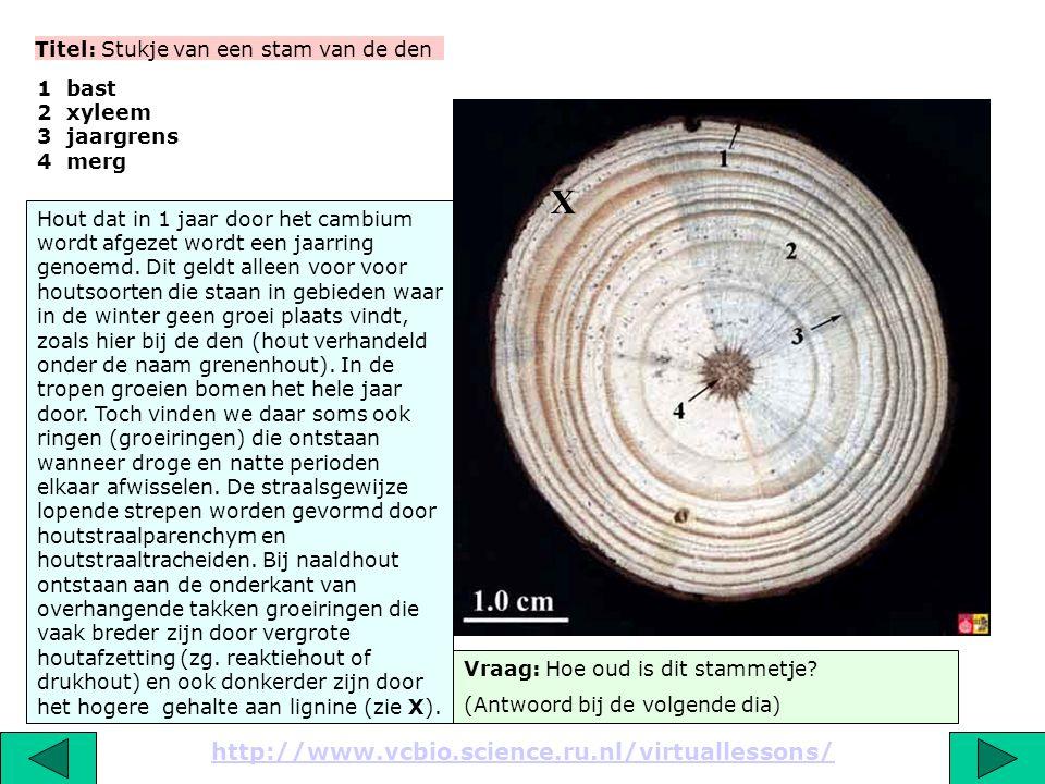 Titel: Stukje van een stam van de den 1 bast 2 xyleem 3 jaargrens 4 merg Vraag: Hoe oud is dit stammetje.
