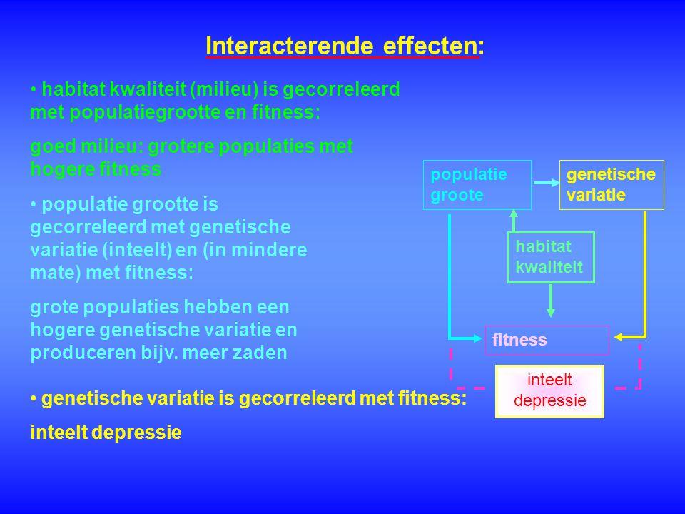 Interacterende effecten: genetische variatie genetische variatie is gecorreleerd met fitness: inteelt depressie populatie groote populatie grootte is