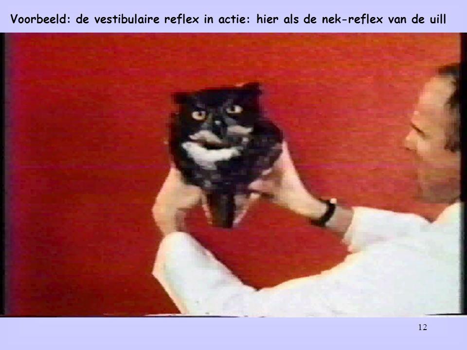 12 Voorbeeld: de vestibulaire reflex in actie: hier als de nek-reflex van de uill