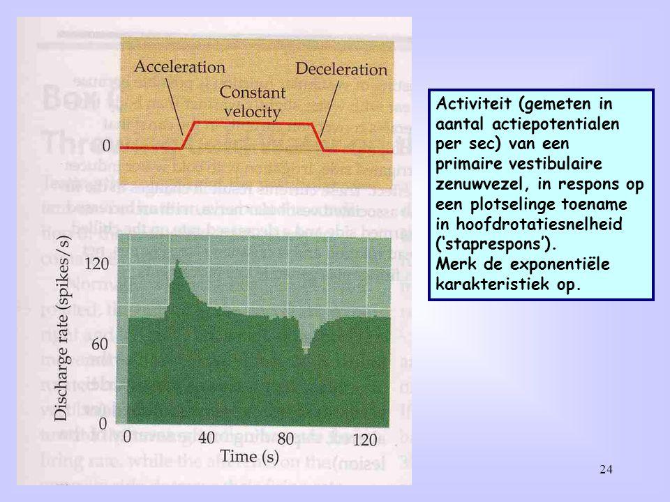 24 Activiteit (gemeten in aantal actiepotentialen per sec) van een primaire vestibulaire zenuwvezel, in respons op een plotselinge toename in hoofdrot