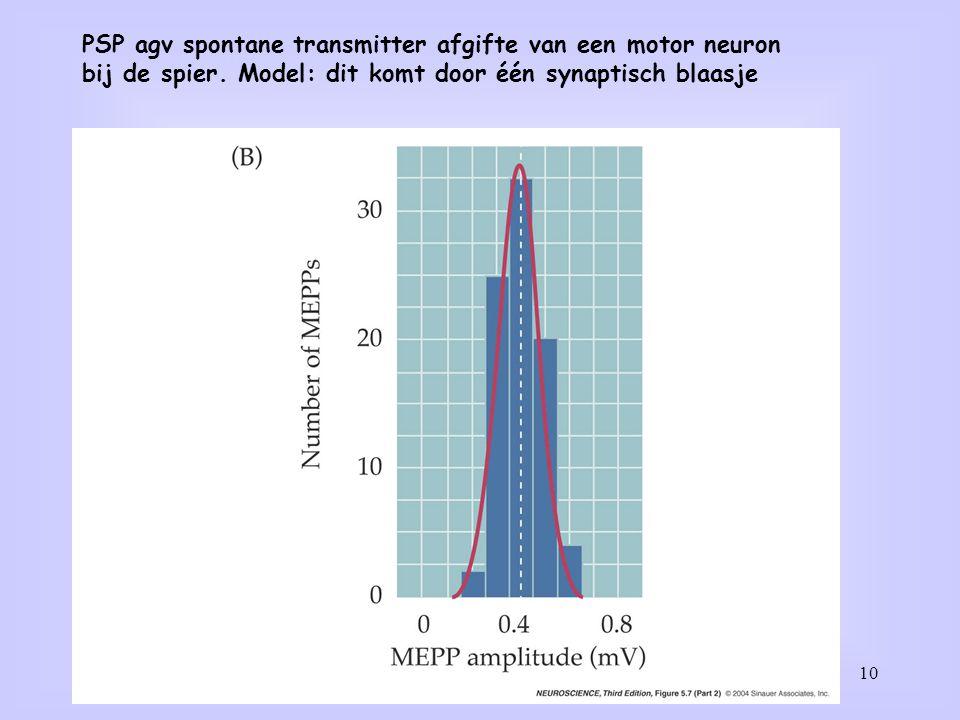 10 PSP agv spontane transmitter afgifte van een motor neuron bij de spier. Model: dit komt door één synaptisch blaasje