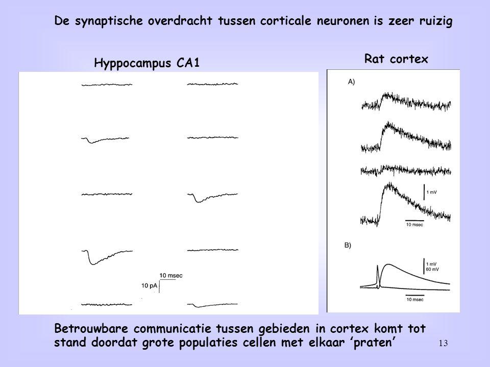 13 De synaptische overdracht tussen corticale neuronen is zeer ruizig Betrouwbare communicatie tussen gebieden in cortex komt tot stand doordat grote