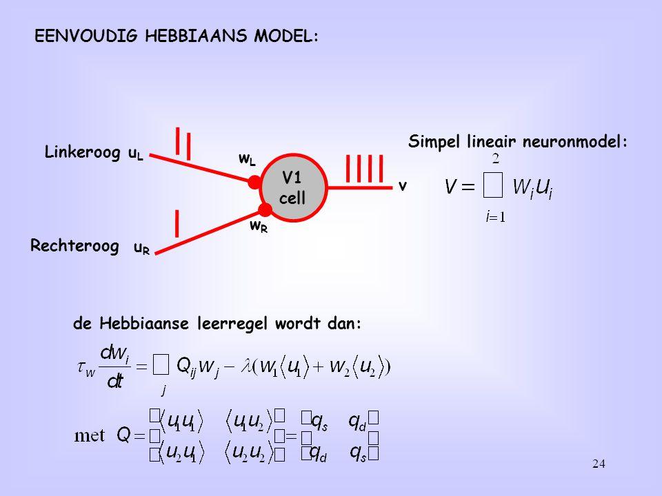 24 V1 cell uLuL wLwL v uRuR wRwR Linkeroog Rechteroog Simpel lineair neuronmodel: de Hebbiaanse leerregel wordt dan: EENVOUDIG HEBBIAANS MODEL:
