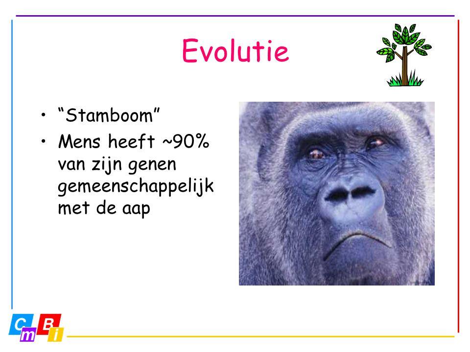 """Evolutie """"Stamboom"""" Mens heeft ~90% van zijn genen gemeenschappelijk met de aap"""