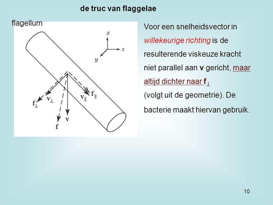 flagellum Voor een snelheidsvector in willekeurige richting is de resulterende viskeuze kracht niet parallel aan v gericht, maar altijd dichter naar f  (volgt uit de geometrie).