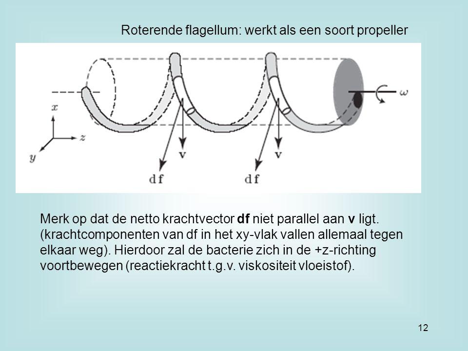 Roterende flagellum: werkt als een soort propeller Merk op dat de netto krachtvector df niet parallel aan v ligt. (krachtcomponenten van df in het xy-