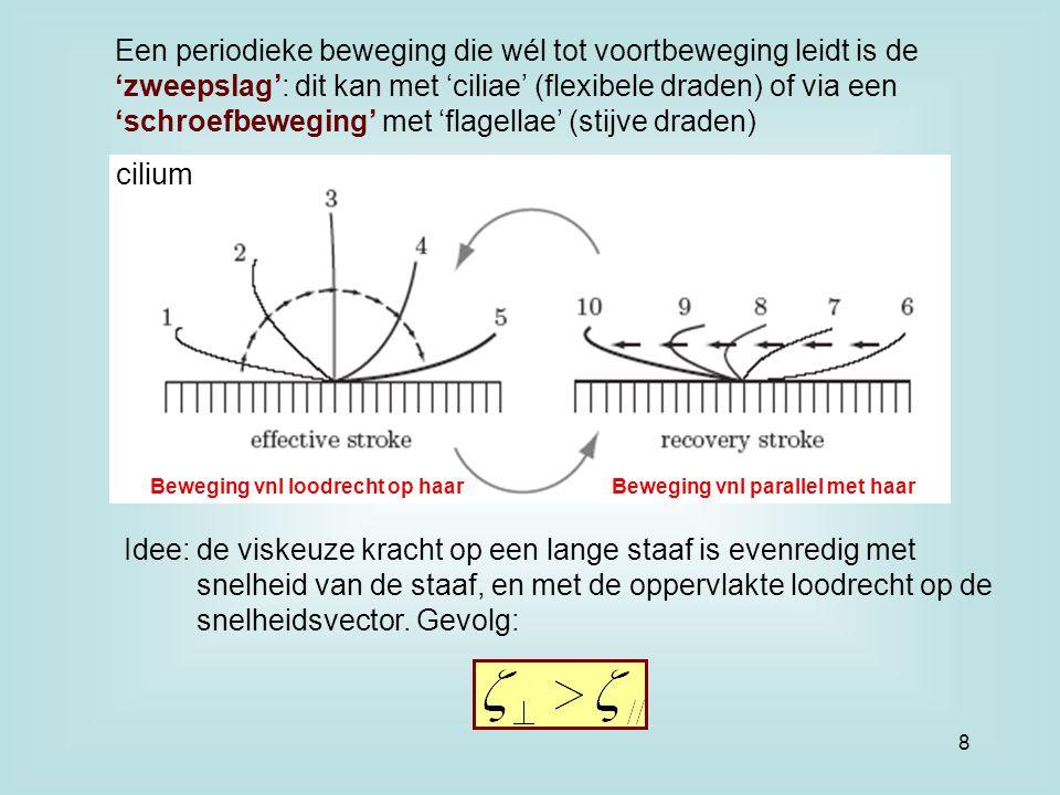 Een periodieke beweging die wél tot voortbeweging leidt is de 'zweepslag': dit kan met 'ciliae' (flexibele draden) of via een 'schroefbeweging' met 'flagellae' (stijve draden) Idee: de viskeuze kracht op een lange staaf is evenredig met snelheid van de staaf, en met de oppervlakte loodrecht op de snelheidsvector.