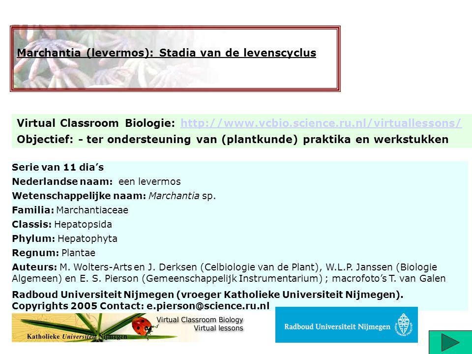 Serie van 11 dia's Nederlandse naam: een levermos Wetenschappelijke naam: Marchantia sp. Familia: Marchantiaceae Classis: Hepatopsida Phylum: Hepatoph
