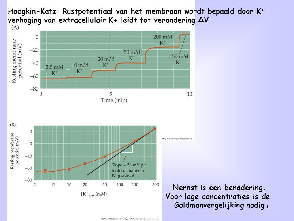 11 Hodgkin-Katz: Rustpotentiaal van het membraan wordt bepaald door K + : verhoging van extracellulair K+ leidt tot verandering ∆V Nernst is een benad