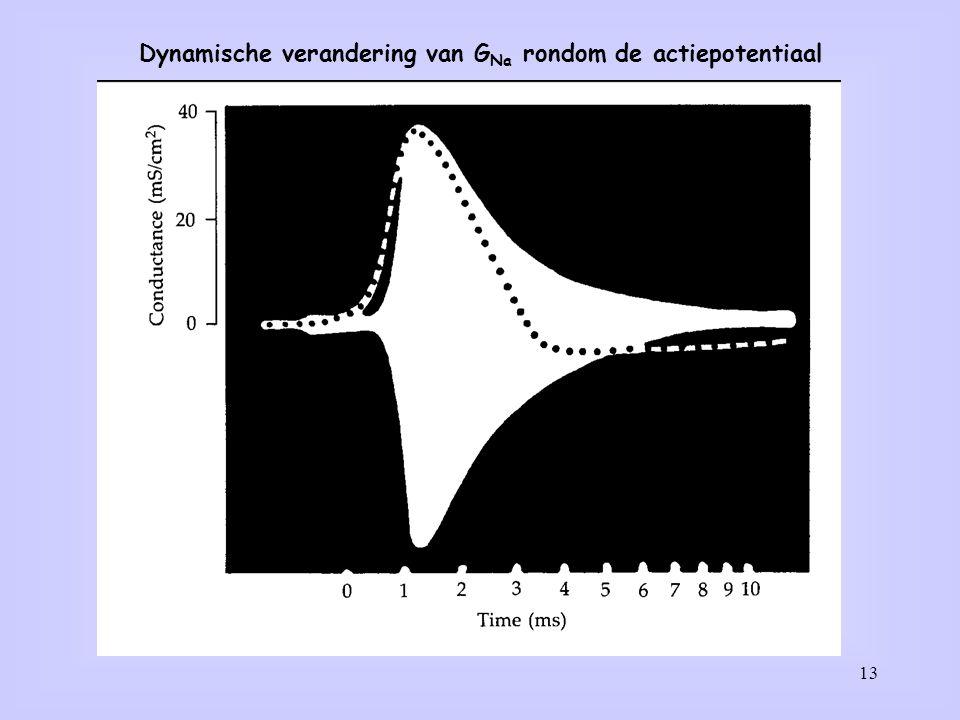 13 Dynamische verandering van G Na rondom de actiepotentiaal