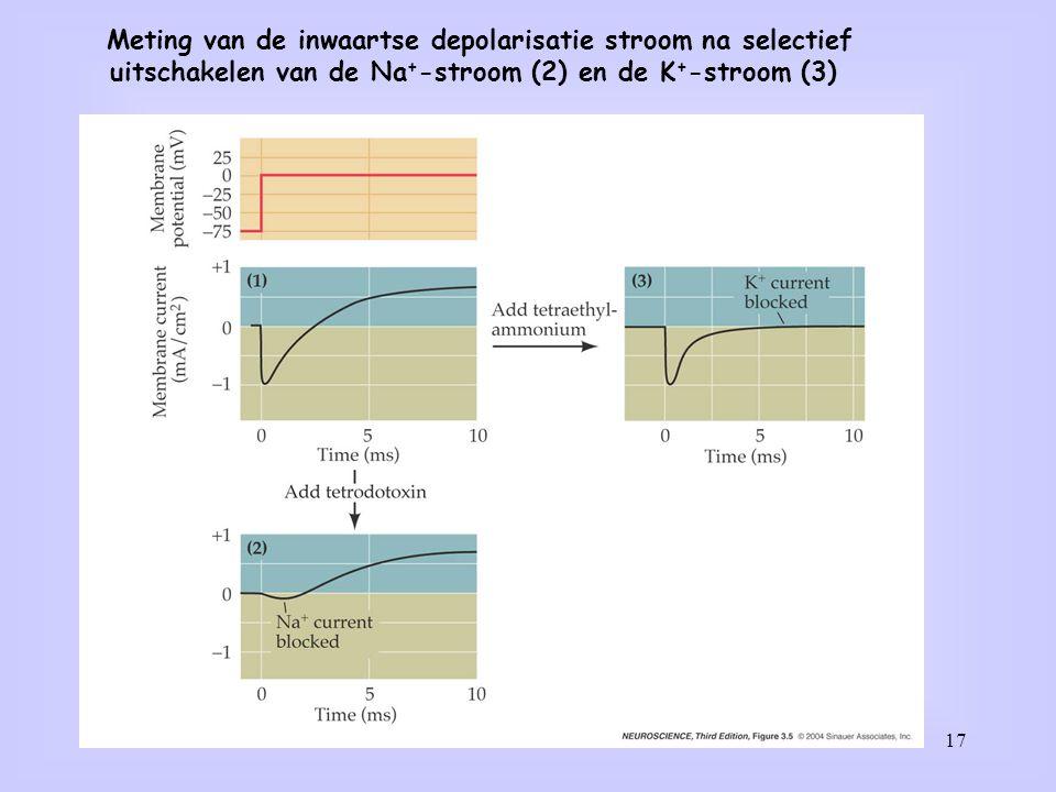17 Meting van de inwaartse depolarisatie stroom na selectief uitschakelen van de Na + -stroom (2) en de K + -stroom (3)