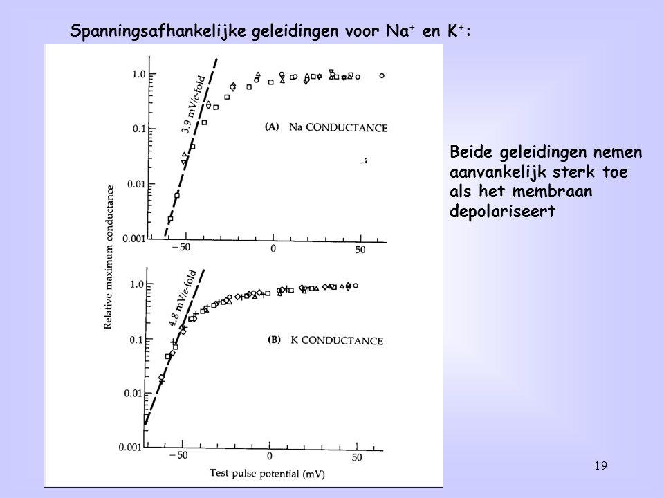 19 Spanningsafhankelijke geleidingen voor Na + en K + : Beide geleidingen nemen aanvankelijk sterk toe als het membraan depolariseert