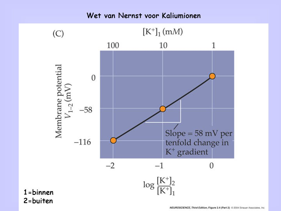 2 Wet van Nernst voor Kaliumionen 1=binnen 2=buiten