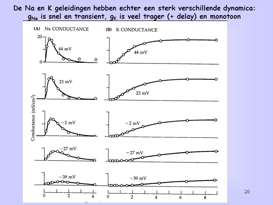 20 De Na en K geleidingen hebben echter een sterk verschillende dynamica: g Na is snel en transient, g K is veel trager (+ delay) en monotoon