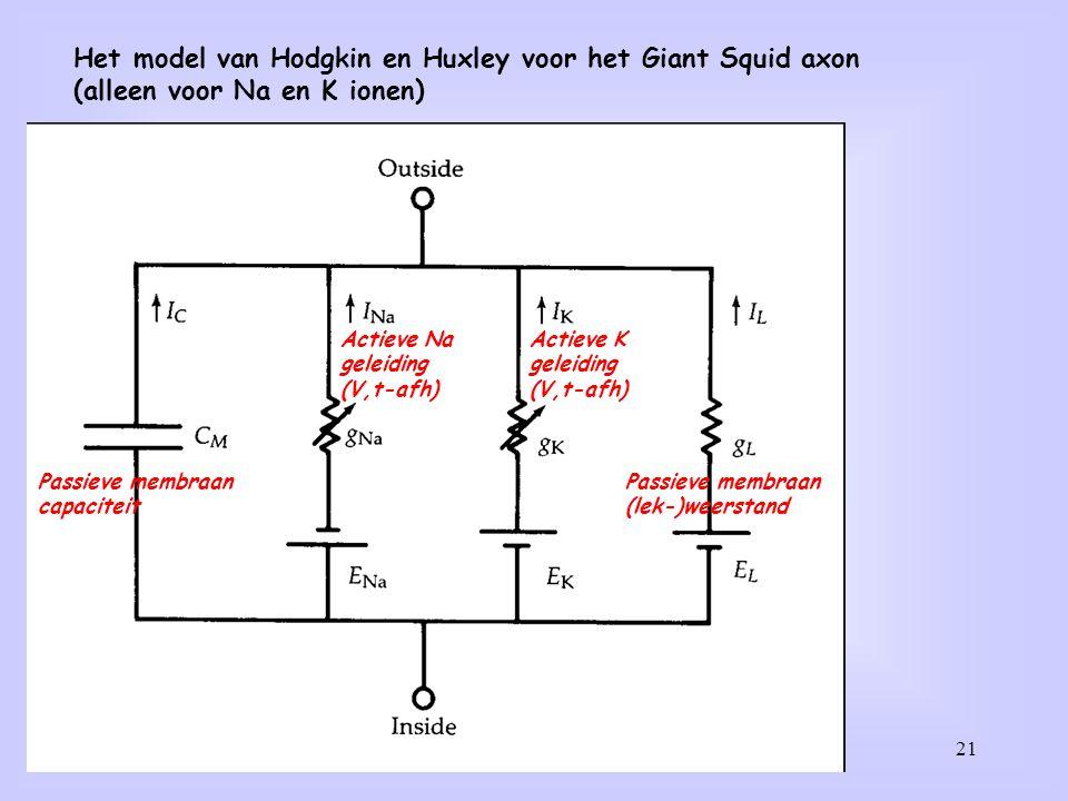 21 Het model van Hodgkin en Huxley voor het Giant Squid axon (alleen voor Na en K ionen) Passieve membraan capaciteit Passieve membraan (lek-)weerstan
