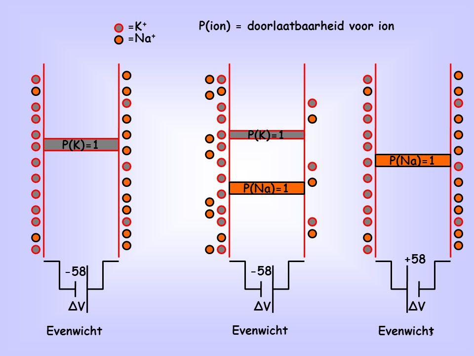 5 =K + =Na + Evenwicht ∆V -58 ∆V P(K)=1 P(Na)=1 Evenwicht -58 Evenwicht ∆V +58 P(Na)=1 P(K)=1 P(ion) = doorlaatbaarheid voor ion