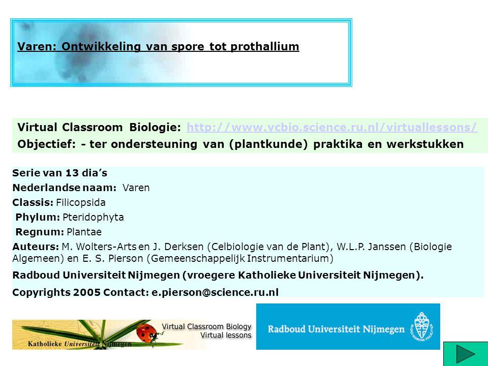 Serie van 13 dia's Nederlandse naam: Varen Classis: Filicopsida Phylum: Pteridophyta Regnum: Plantae Auteurs: M. Wolters-Arts en J. Derksen (Celbiolog