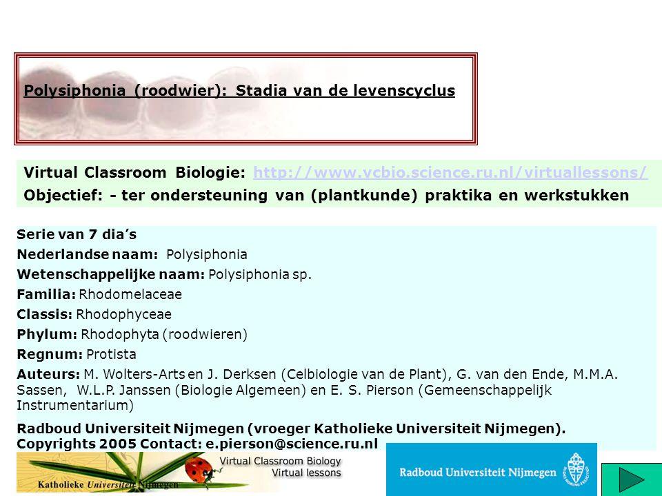 Titel: Levenscyclus van polysiphonia (roodwier) http://www.vcbio.science.ru.nl/virtuallessons/ Roodwieren zijn haplodiplonten (organismen met zowel een duidelijke haploide als diploide levensfase) met een ingewikkelde driefsische levenscyclus die vaak naast de gametofyt (bij polysiphonia heterothallisch= verschillende mannelijke en vrouwelijke gametofyten) nog twee verschillende sporofytstadia kent.