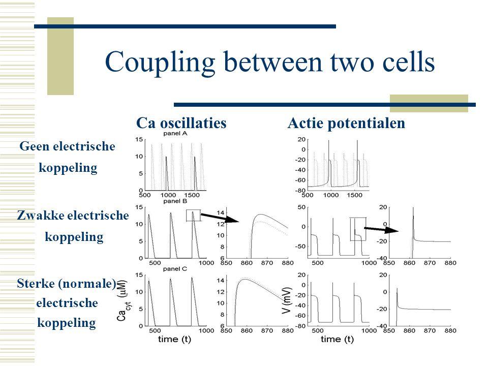 Coupling between two cells Geen electrische koppeling Zwakke electrische koppeling Sterke (normale) electrische koppeling Ca oscillatiesActie potentialen