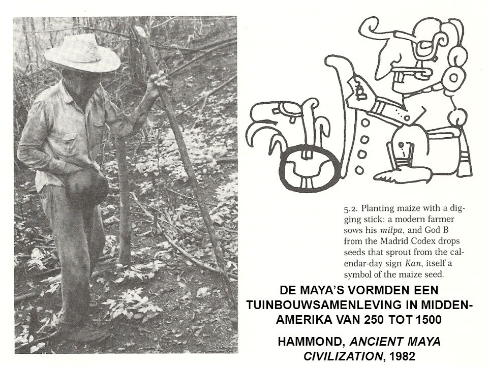 DE MAYA'S VORMDEN EEN TUINBOUWSAMENLEVING IN MIDDEN- AMERIKA VAN 250 TOT 1500 HAMMOND, ANCIENT MAYA CIVILIZATION, 1982