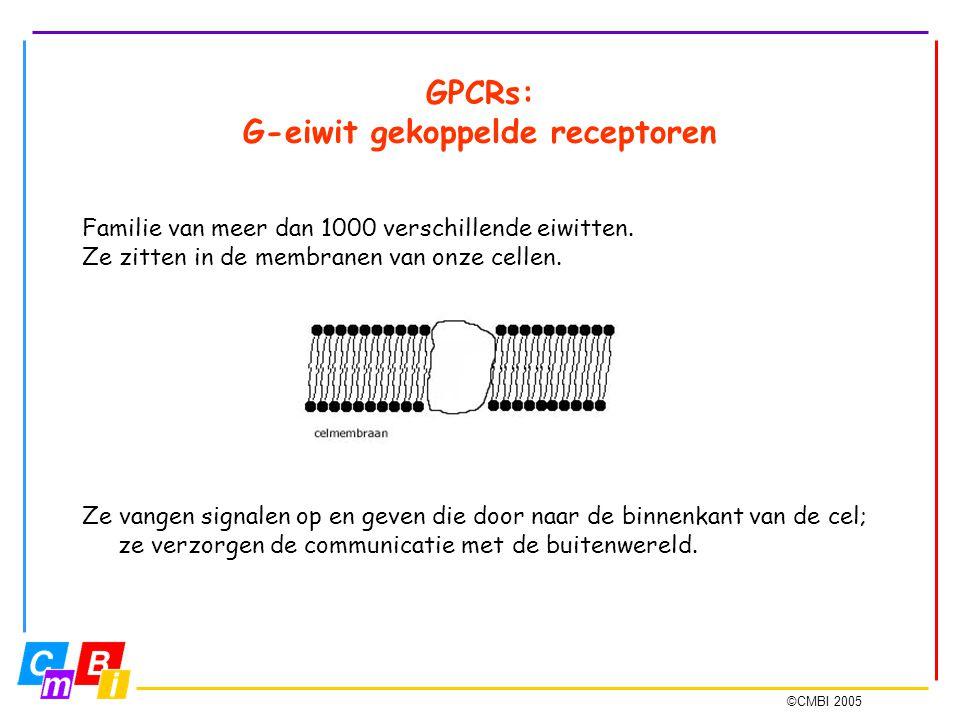 ©CMBI 2005 GPCRs: G-eiwit gekoppelde receptoren Familie van meer dan 1000 verschillende eiwitten. Ze zitten in de membranen van onze cellen. Ze vangen
