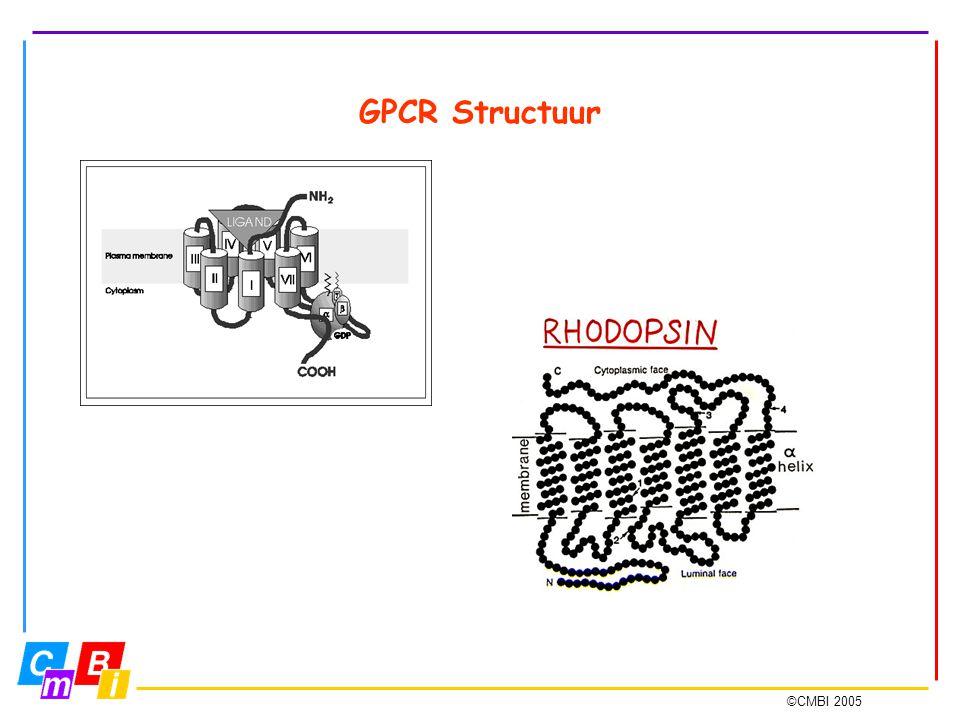©CMBI 2005 GPCR Structuur