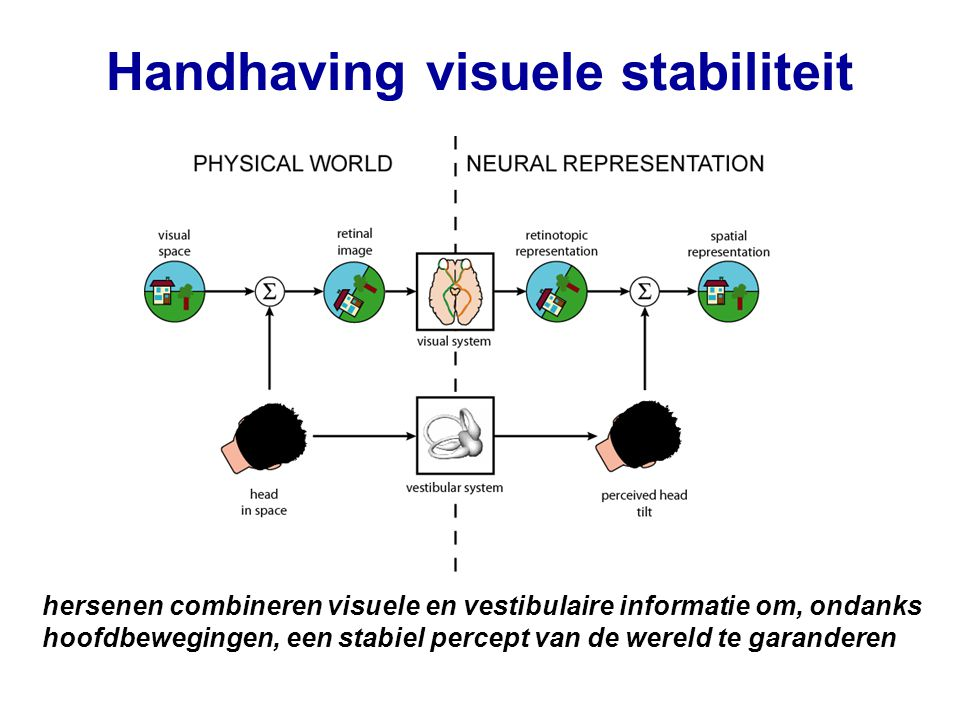 Meting hoofdkanteling Visueel systeem (panorama) Tast systeem (druk cues) Spiersensoren Vestibulair systeem: - halfcirkelvormige kanalen - otolieten