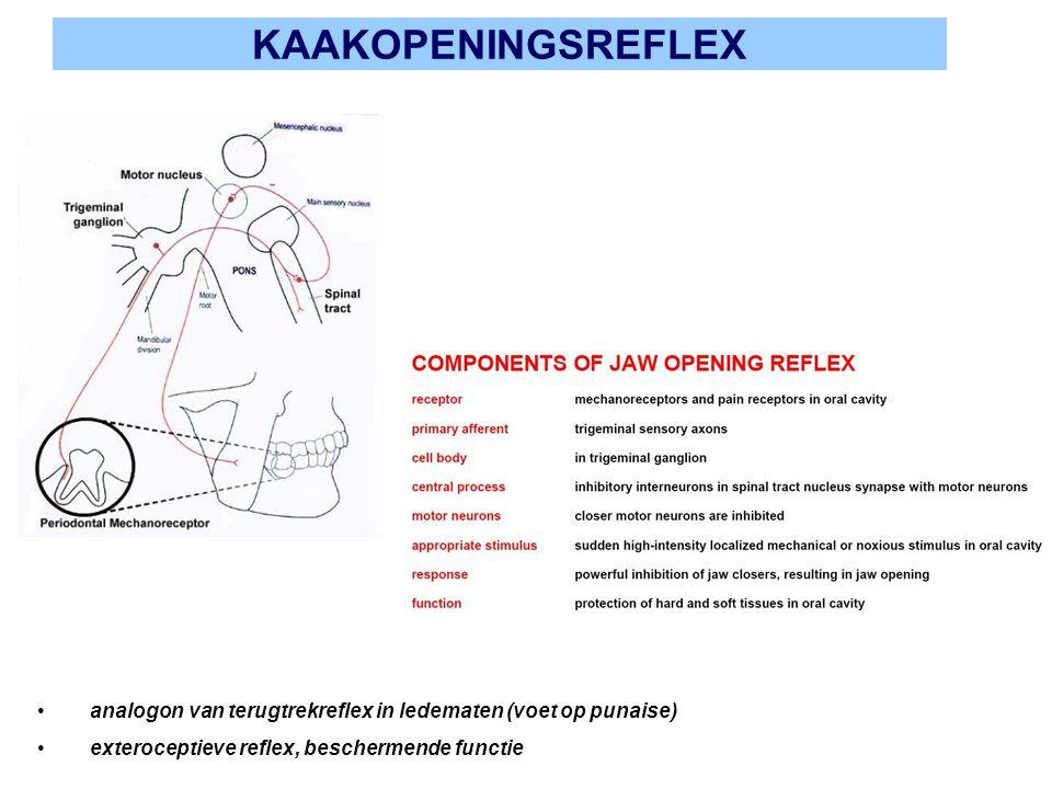 KAAKOPENINGSREFLEX analogon van terugtrekreflex in ledematen (voet op punaise) exteroceptieve reflex, beschermende functie
